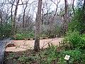 Houston Arboretum and Nature Center - panoramio - Idawriter.jpg