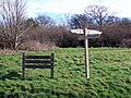 Ibberton Hill Drive in Picnic Area - geograph.org.uk - 367822.jpg