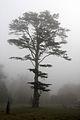 Ickworth House, Suffolk, England -mist-2March2012 (2).jpg