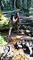 Ikogosi Warm water spring 12.jpg