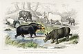Illustration from A History of the Earth and Animated Nature by Oliver Goldsmith from rawpixel's own original edition of the publication 00025.jpg