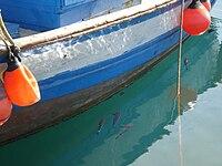 Im Hafen von Tarifa.JPG