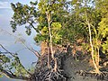 Images from Bali Island Sunderbans IMG 20171112 062530.jpg