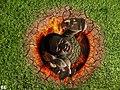 In Hell (43 de 52 y 1 2) (4035128182).jpg