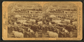 In the Great Union Stock Yards (stockyards), Chicago, U.S.A, from Robert N. Dennis collection of stereoscopic views 2.png