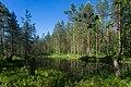 In the forest near Kanneljarvi, Leningrad Oblast, 2019-06-22-2.jpg