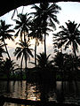 India - Kerala - 016 - sunset through the palms (2068508221).jpg