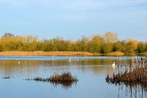 Irthlingborough Lakes and Meadows