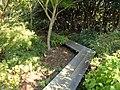 J. C. Raulston Arboretum - DSC06228.JPG
