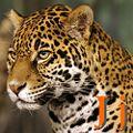 J Jaguar.jpg