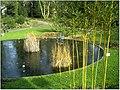 January Frost Botanic Garden Freiburg - Master Botany Photography 2014 - panoramio (13).jpg