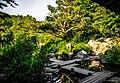 Japanischer Garten im Westpark Münchens (9784461495).jpg