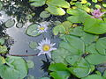 Jardin de lEtat, Saint-Denis (2854783741).jpg