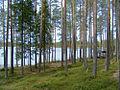 Kalimeenlampi2.jpg