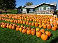 Kalscheur's Pumpkin Patch - panoramio - Corey Coyle (1).jpg