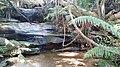 Katandra Bushland Sanctuary- August 2015.jpg