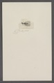Kend - Print - Iconographia Zoologica - Special Collections University of Amsterdam - UBAINV0274 064 02 0012.tif
