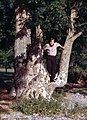 Keswick-16-Baum-1989-gje.jpg