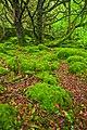 Killarney Forest - HDR (10376953823).jpg