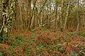 Kingswood Common - geograph.org.uk - 1048860.jpg