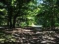 Kingswood Common - geograph.org.uk - 205401.jpg
