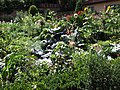 Kräuter und Gemüse Garten - panoramio.jpg