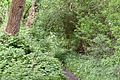 Kreis Pinneberg, Landschaftsschutzgebiet Moorige Feuchtgebiete LSG 56-PI-08 Uetersen Langes Tannen 03.JPG