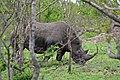 Kruger Park, Rhinoceros - panoramio.jpg