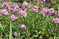 Kto przy Obrze temu dobrze – ogród nad Obrą - Zbąszyń - 001115c.jpg
