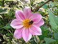 Kwiatek 72.jpg