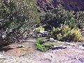 L'ouad de Bounasroune 4 - panoramio.jpg