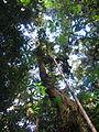 La Amistad Panama Biosphere Reserve - Parque Nacional Volcan Baru (a core zone) 20.JPG