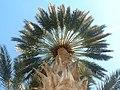 La tête dans les palmiers-dequoi.jpg