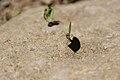 Laborous ant.jpg