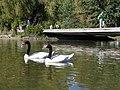 Laguna de los Patos.jpg