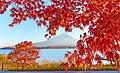 Lake Kawaguchiko and Mount Fuji at sunset during the Momijigari period.jpg