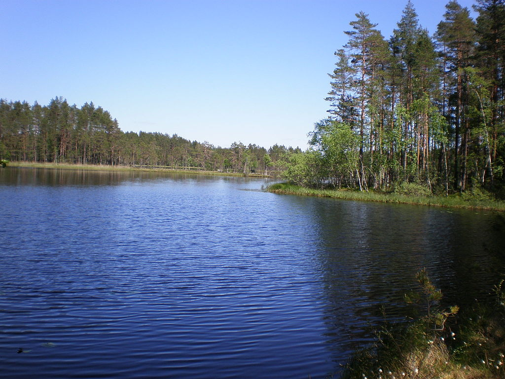 Lake Kirkaslampi at Seitseminen NP