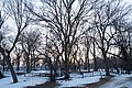 Lake of the Isles Dog Park in Winter - City of Minneapolis (43782310104).jpg