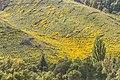 Landscape in Tasman Region 02.jpg