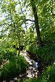 Landschaftsschutzgebiet Gütersloh - Isselhorst - Krullsbach (6).jpg