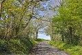 Lane - north east Pont-newydd - geograph.org.uk - 1259674.jpg