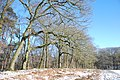 "Lane of ""American"" Oak trees with sitting bench to look over Hoge Erf fields - panoramio.jpg"