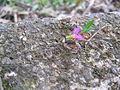 Leafcutter Ants near Sabalito Costa Rica.jpg