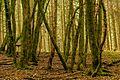 Leitersweiler Wald.jpg
