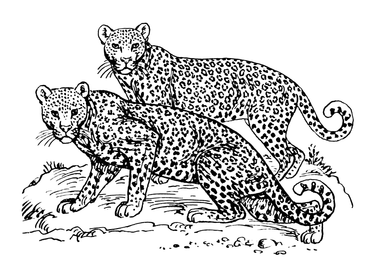 jaguar e type coloring pages - photo#18