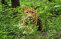 Leopard look.jpg