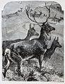 """Les merveilles de l'industrie, 1873 """"Cerf et biches"""". (4727041478).jpg"""