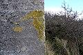 Lichen on the pillbox - geograph.org.uk - 735973.jpg