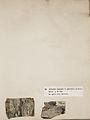 Lichenes Helvetici I II 1842 009.jpg