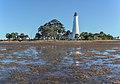 Lighthouse seen from bay St. Marks NWR 2020-01-25.jpg